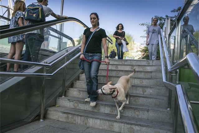 Autorizan el ingreso de perros en el Metro de Madrid