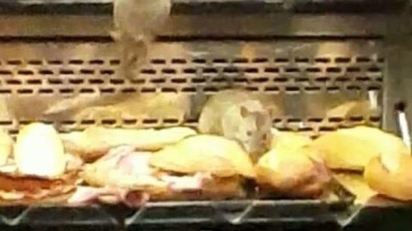 Ratas en el mostrador de una panadería Granier en Pueblo Nuevo